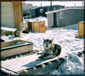 are several photos as well see the iqaluit in nunavut canadian arctic